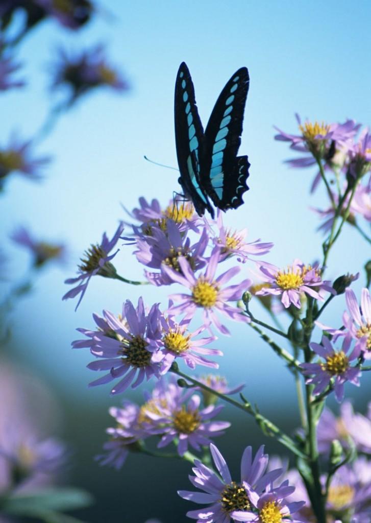 Изумительные фото полевых цветов с бабочками на них ...: http://cvety.mirtesen.ru/photos/20299063167