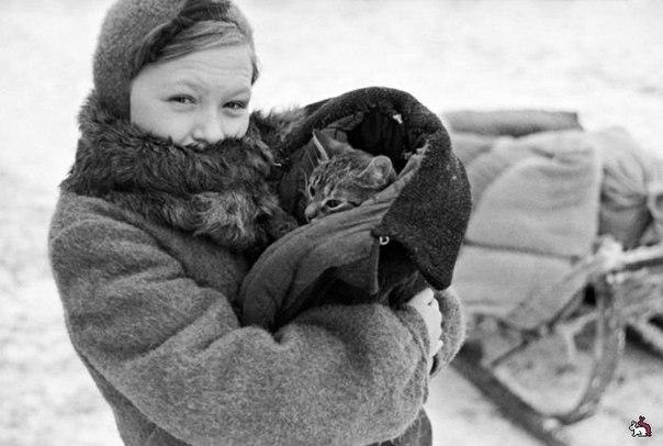 Иcтория о том, как кот помог выжить семье во время блокады Ленинграда