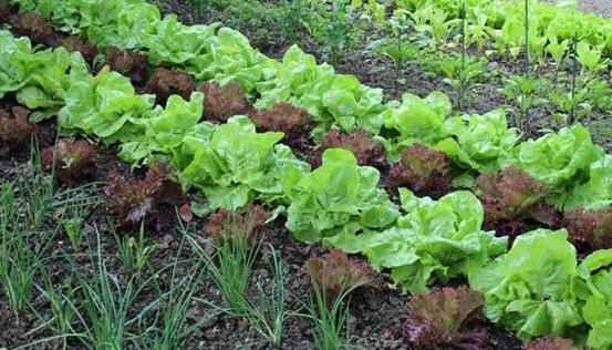 Посадите свои овощи по новом…