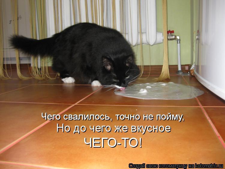 Котоматрица: Чего свалилось, точно не пойму, Но до чего же вкусное ЧЕГО-ТО!
