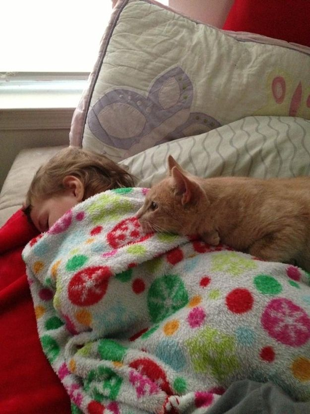 CatsGoldenHearts03 Почему мы любим кошек