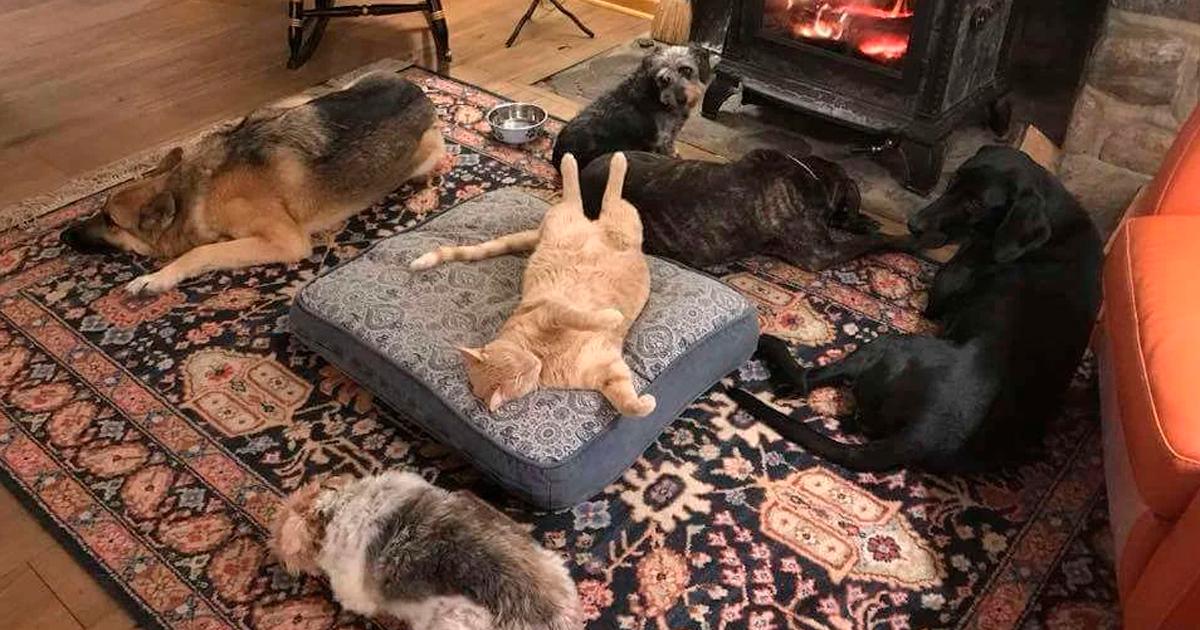 50 смешных фото грустных собак, которых коты изгнали сихмест