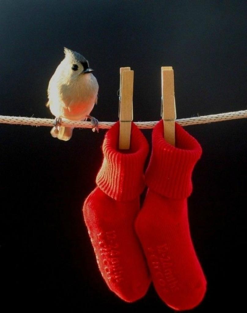 Эти удивительные птицы
