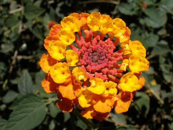 Названия и фото известных цветов