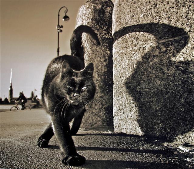 Гены беспородного уличного кота из Питера обскакали самых чистокровных