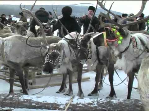 Праздник оленеводов в Якутии