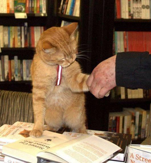 Уличный кот, который воспитал себе хозяина и прославился на весь мир