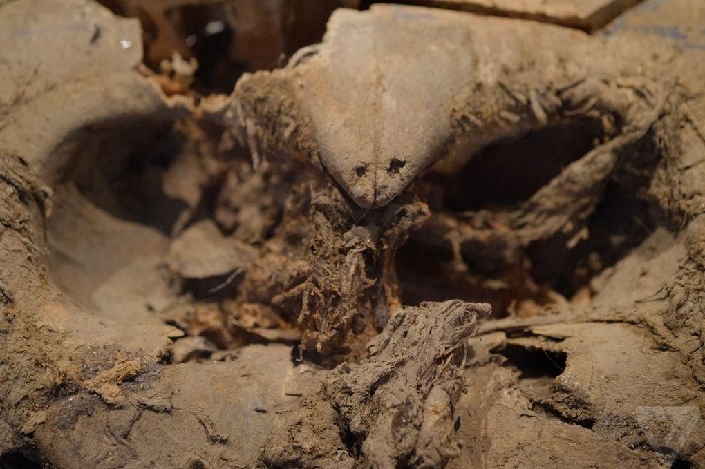 Yuka06 Самый известный мамонт из Якутии: Юка