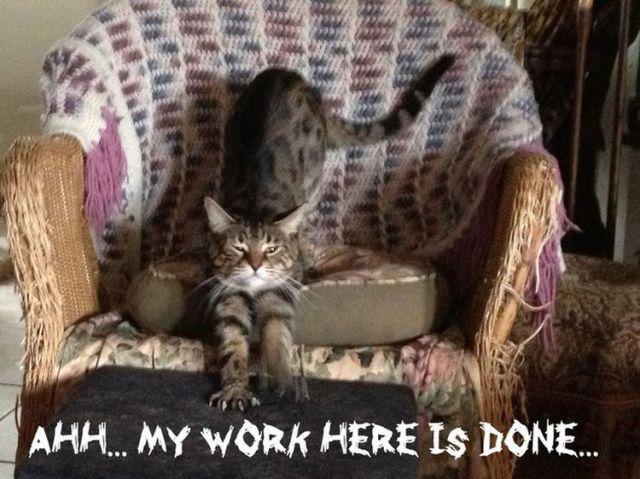 Кошка царапает мебель