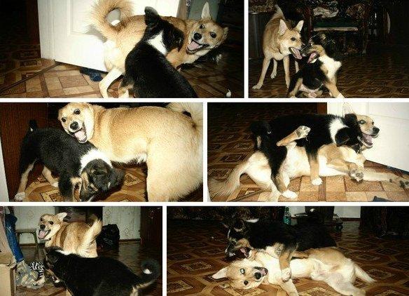 Нашла на улице щенка. Привела домой, чтобы найти ему семью. Знаете... Я в жизни не видела своего пса более счастливым!