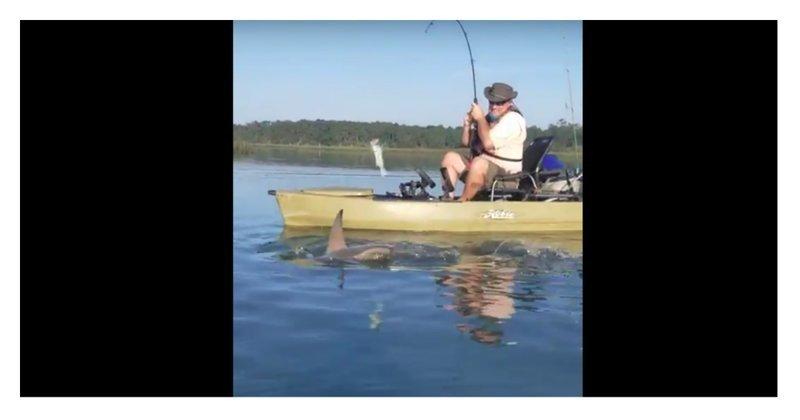 """Акула """"утащила"""" у  рыбака улов"""