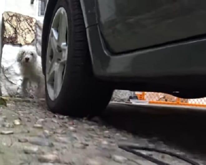 Бездомному псу собирались найти хозяев, но тут случилось непредвиденное