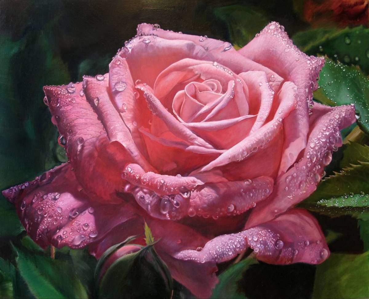 Гифки и фото цветы розы