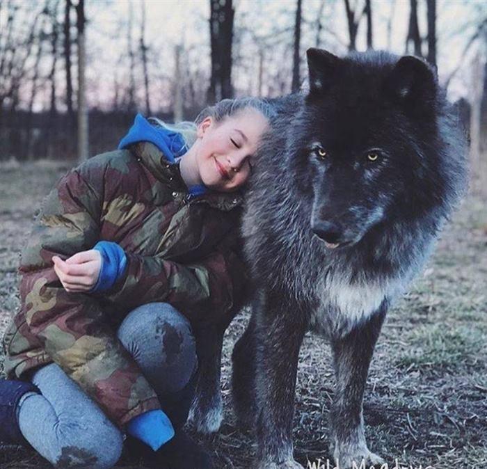 Волкособы: нежные гиганты, к…