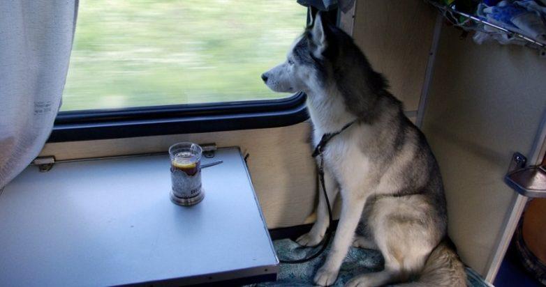 Животные в России теперь могут путешествовать в поездах без хозяев