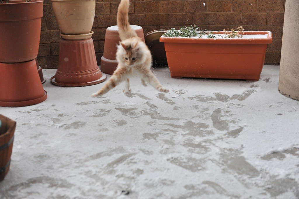 Коты, которые впервые увидели снег.