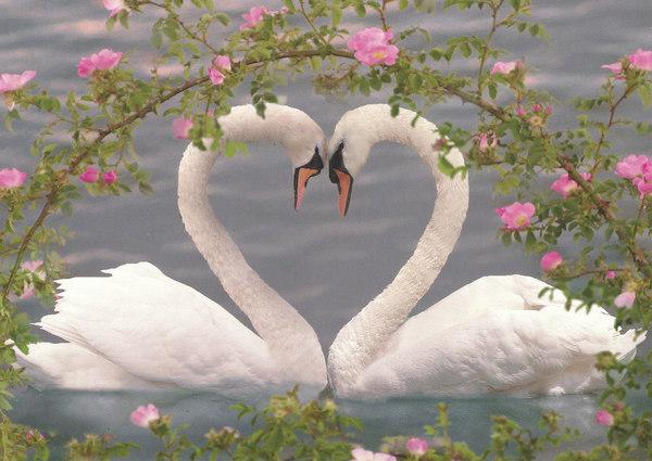 На плоту любви
