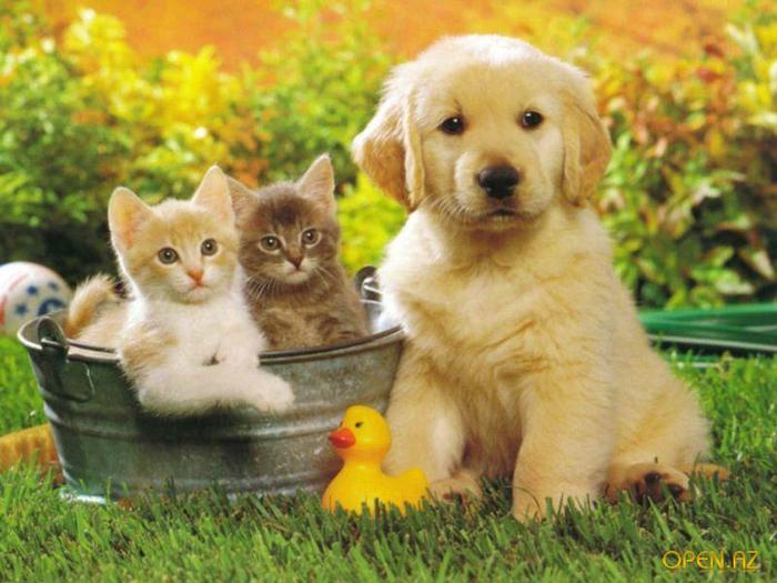 1263307340_cats-and-dog (700x525, 57Kb)