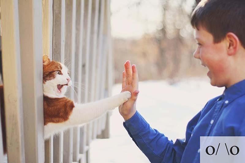 catsmiles 12 Кошачьи смайлики