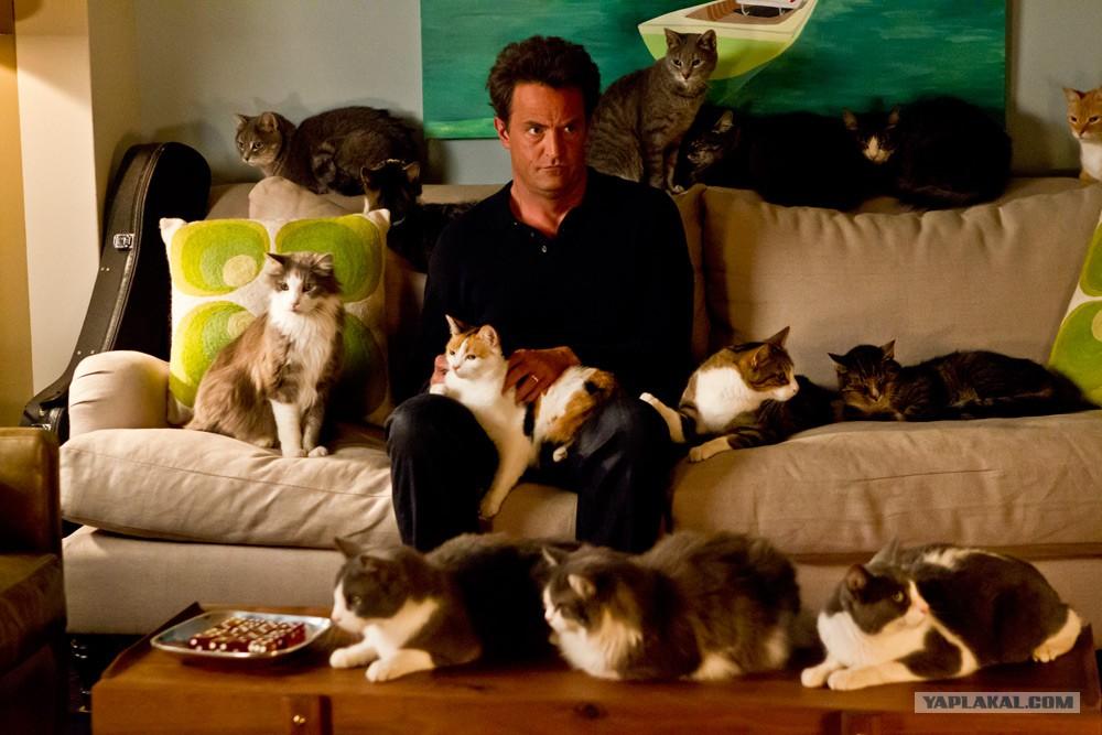 Картинки по запроÑу мужчина и 40 кошек
