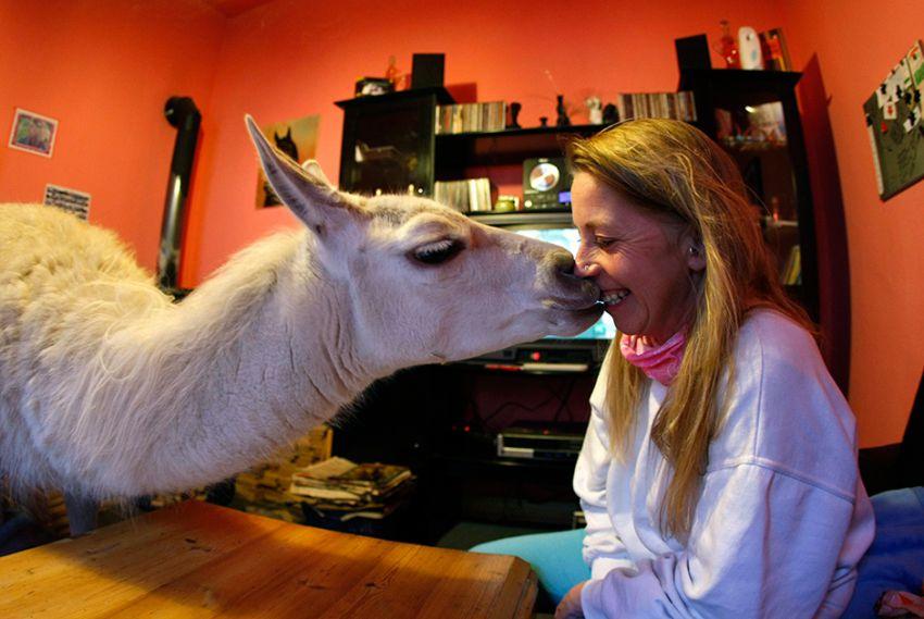 Всемирный день поцелуев поцелуй, животные, позитив