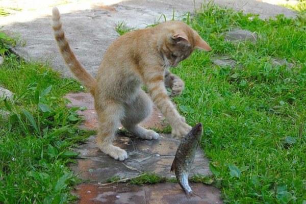 Себе не обязательно, а коту …