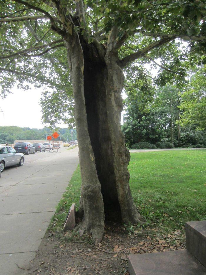 Полое, но по-прежнему живое дерево, живучесть, жизнь, мир, планета, растительность, фото