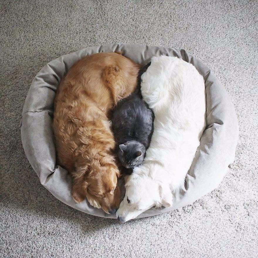 Уотсон, Кико и Гарри - лучшие друзья, которые не могут друг без друга