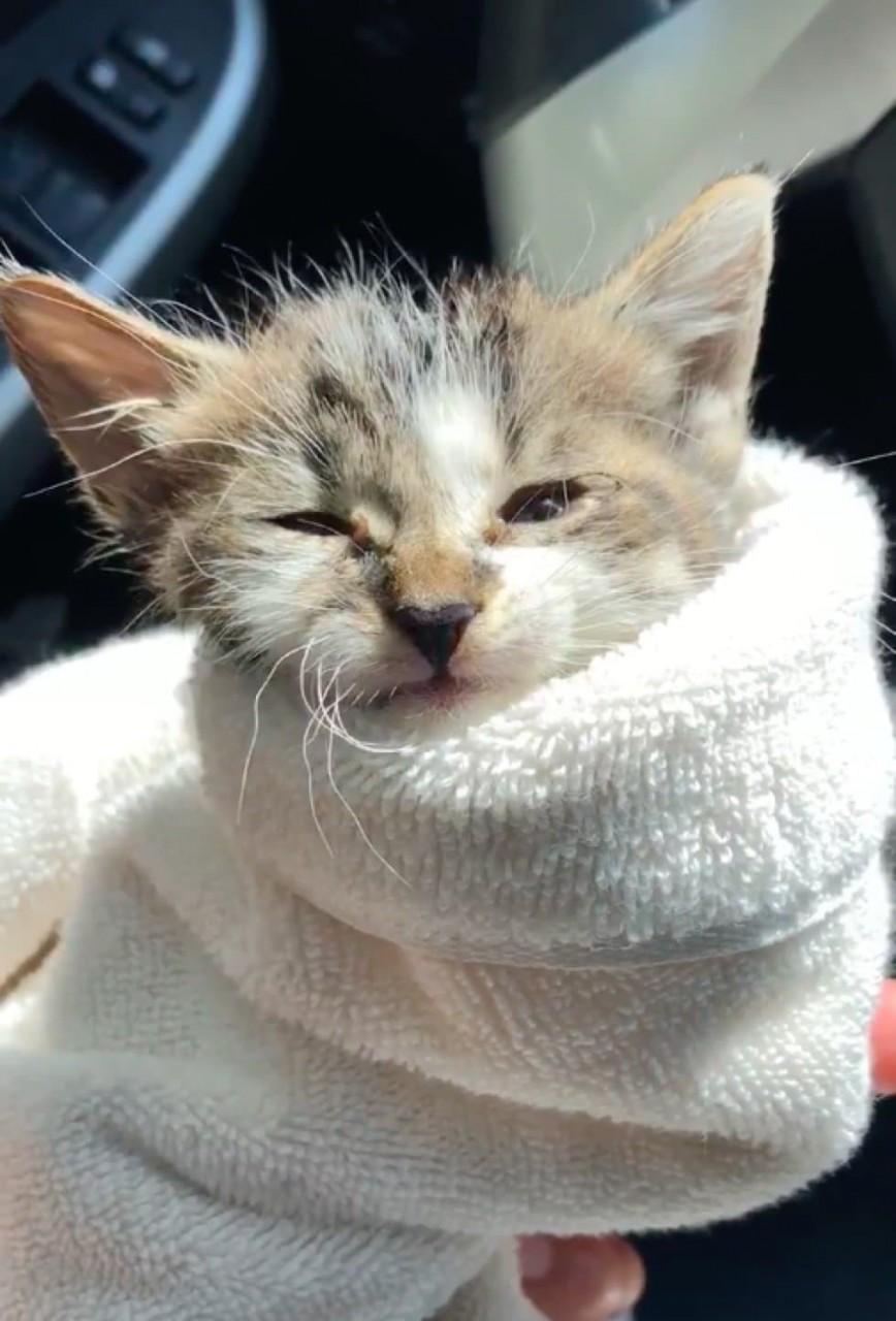Дети аккуратно несли в руках котенка… Они пришли в зоомагазин, прося помощи!