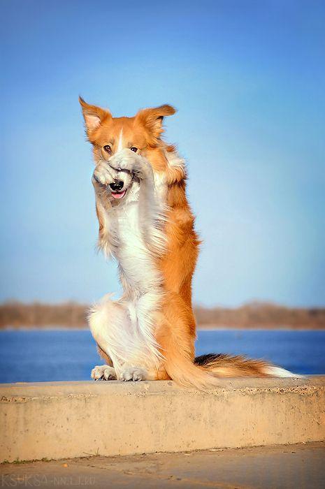 Про собак или почему собака лучший друг человека собака, друг человека