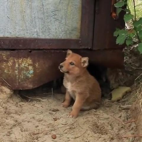 Собачка привела людей к двум своим щенкам, чтобы люди оказали им помощь, и накормили едой.