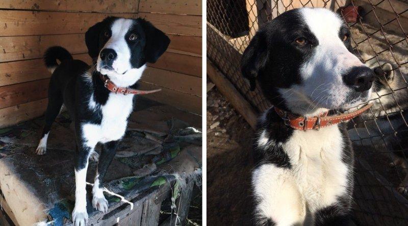 Молодой пес боялся даже выйти из вольера, но волонтеры не сдавались