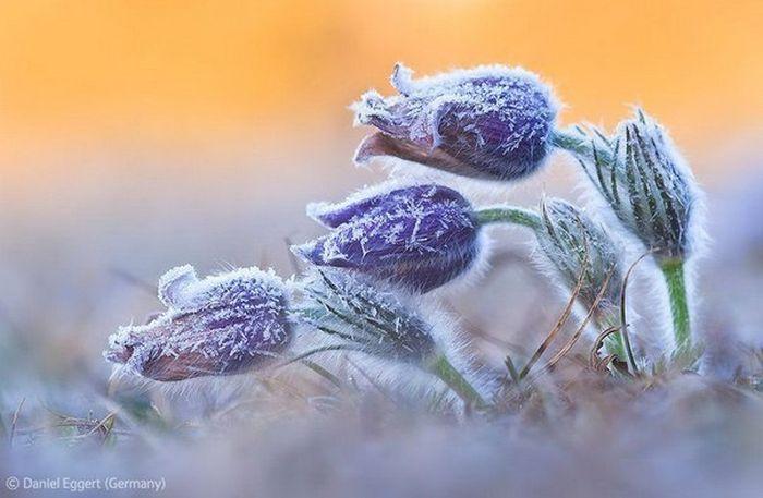 Победители Конкурса фотографий дикой природы 2012 ПРИСТАНЬ ОПТИМИСТОВ