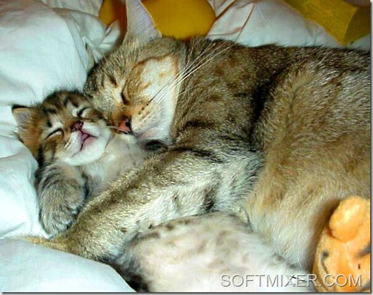 caring-for-cats-sleep