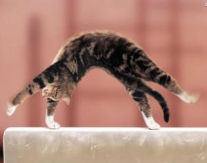КОШКИН ДОМ. Гимнастика для кошек
