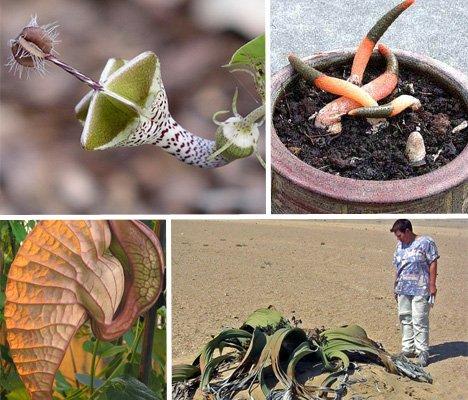 Самые редкие, экзотические и потрясающие растения