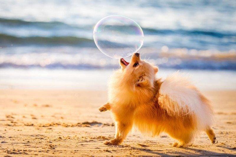 Самые фотогеничные собаки престижного конкурса английского кинологического клуба