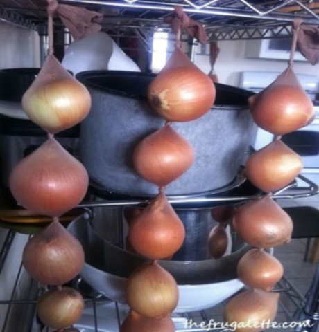 onion.jpg-1