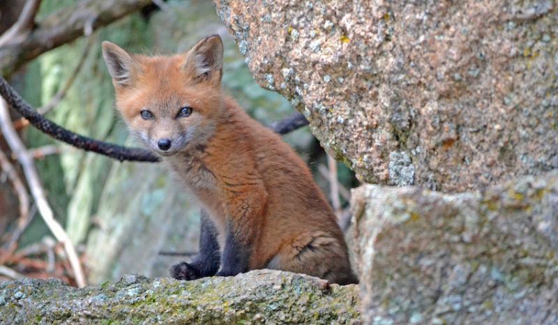 Вжух, и ты в джунглях: 10 крутейших онлайн-трансляций про диких животных по всему миру