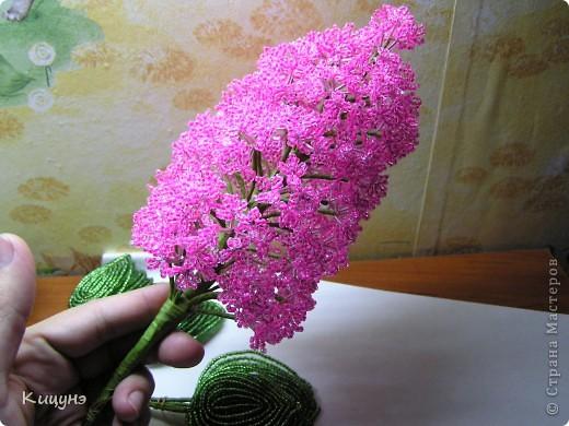 Сирень цветок как сделать
