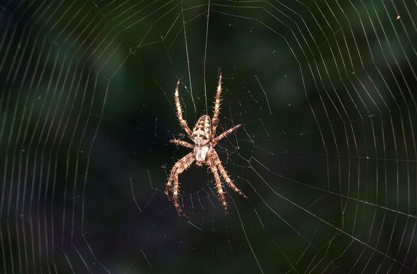 Ученые поняли, как паукам удается парить в воздухе