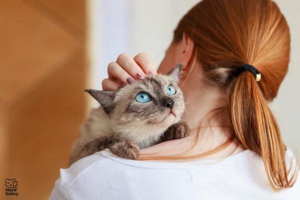 Сколько лет живут кошки в домашних условиях?