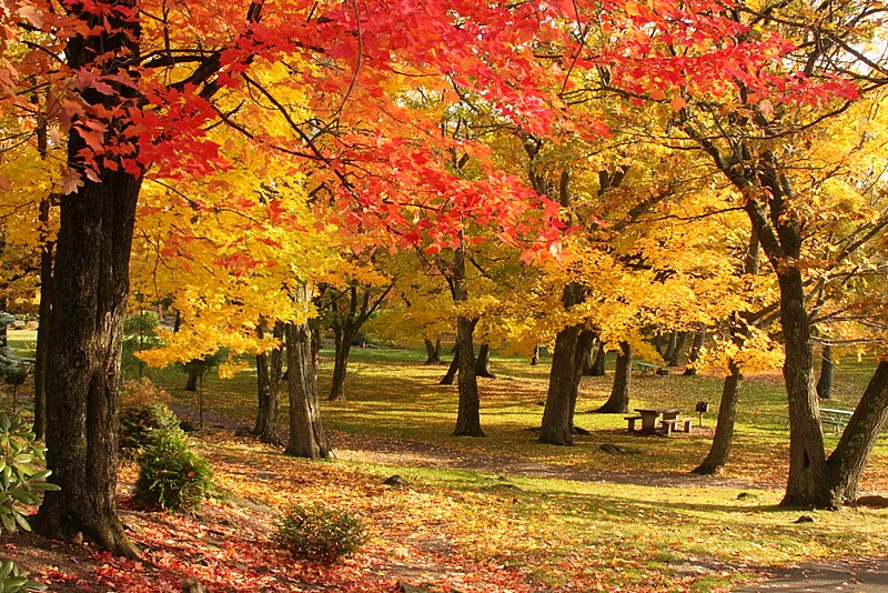 Картинки по запросу стихотворение о осень