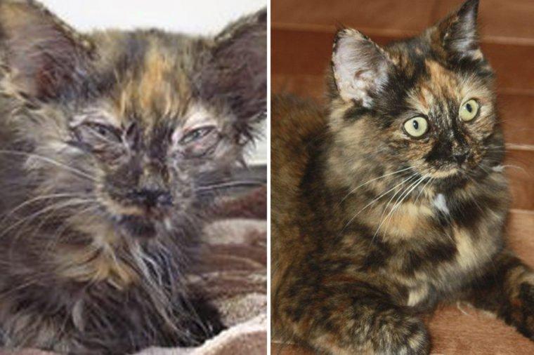 15 историй про бездомных котиков, которые обрели семью - и вернули нам веру в человечество