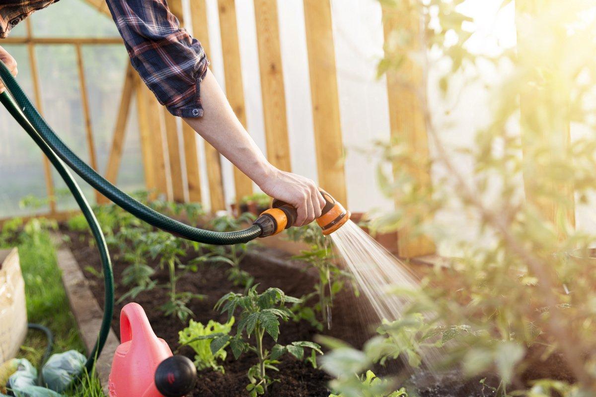 Помогите своему саду пережить жару