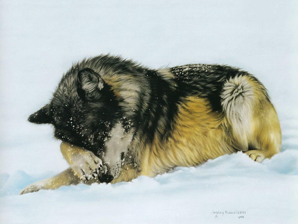 Животные в работах американской художницы Лесли Харрисон (Lesley Harrison)
