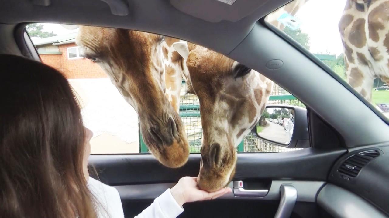 Удивительные и милые животные
