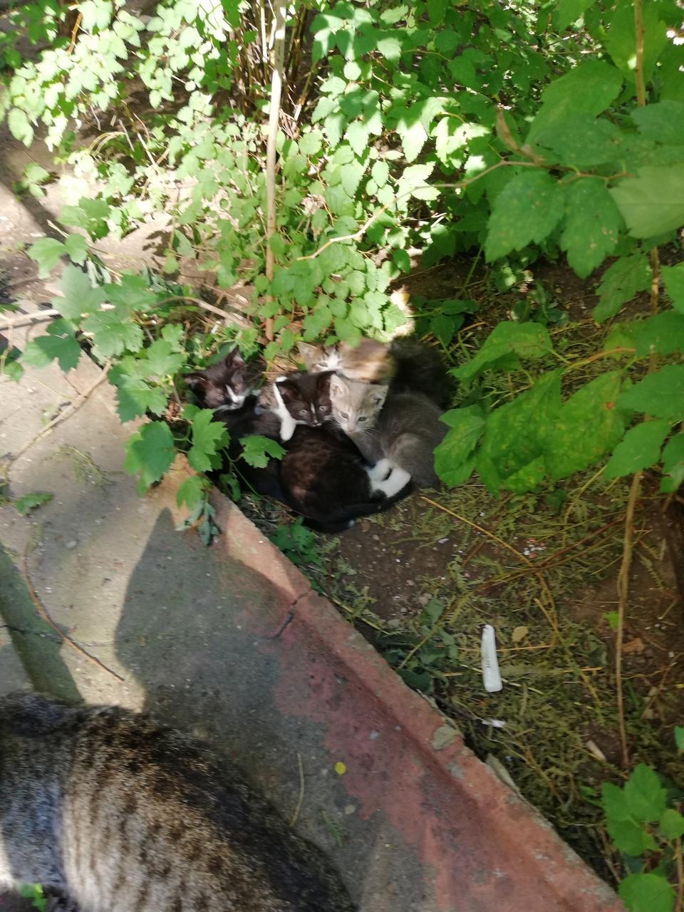 Помогите найти дом котятам