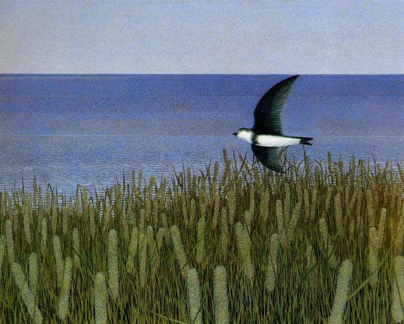 One Swallow, De