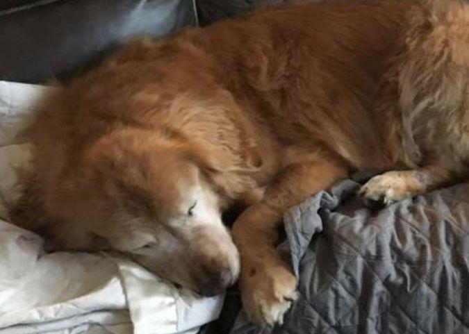 Собаке пришлось удалить глаза, но она нашла себе нового друга, теперь он указывает ей путь